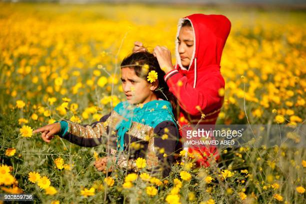 Palestinian children play in a field of wild mustard flowers which grow across the Gaza Strip near the border fence east of Gaza City on March 16...