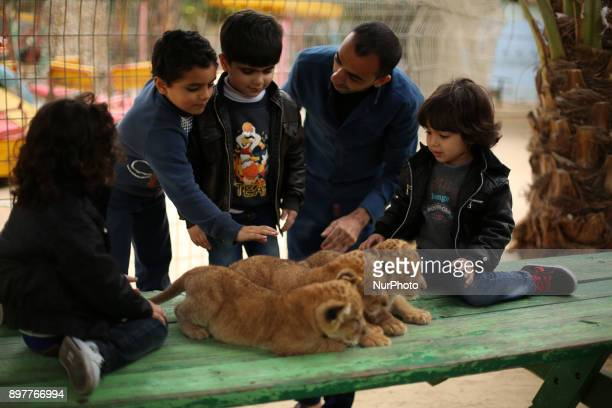 Palestinian children stand close to three lion cubs at a zoo in Rafah in the southern Gaza Strip on December 23 2017 An official told AFP the three...