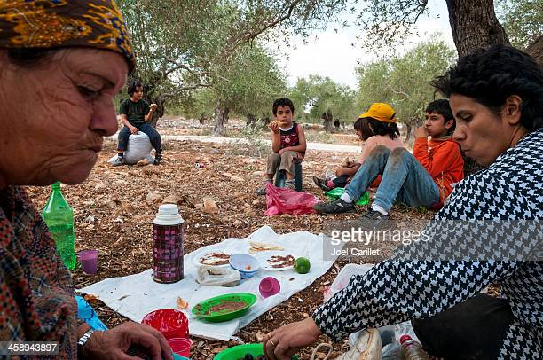 Palästinensische Familie essen Mittagessen im Olivenhain