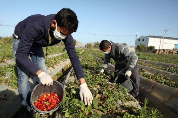 GZA: Daily Life During Coronavirus Epidemic In Gaza Strip