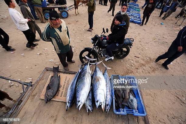 Palestinian fisherman displays his fresh tuna fish at Gaza port in West Bank on January 29 2014
