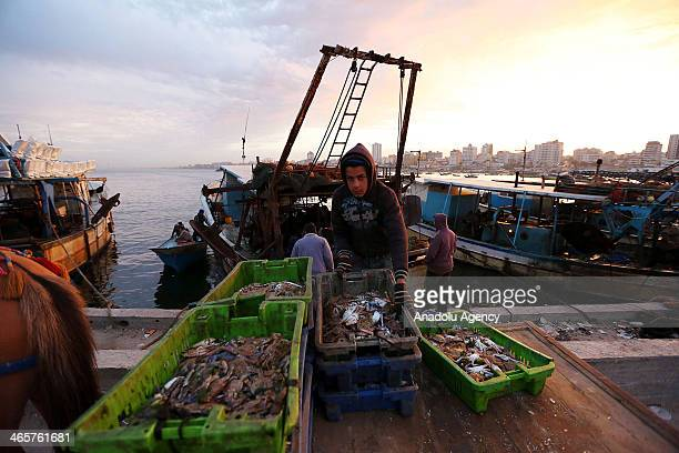 Palestinian fisherman unload boxes of fish from their boat at Gaza port in West Bank on January 29 2014