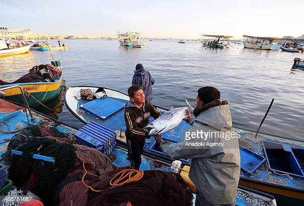 Palestinian fisherman unload boxes of fresh tuna fish from their boat at Gaza port in West Bank on January 29 2014