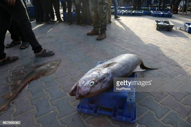 Palestinian fishermen display fish for sale after a night long fishing trip in Gaza seaport on October 19 2017 Fishermen in Gaza can now sail farther...