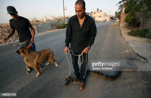 Palestinian Jamal alAmuasi displays one of his pythons and a Tibetan Mastiff outside his house in Betunia near the West Bank city of Ramallah on...
