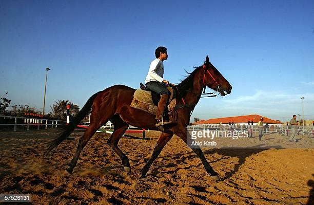 Palestinian knight Muhamad AlDaqas works to break original Arabian horse AlAsefa May 3 2006 at the Palestinian knight club in AlSudaneh village in...