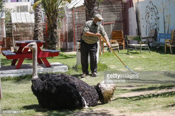 Palestinian local zoo worker, clad in mask due to the COVID-19 coronavirus pandemic, sweeps the ground as an ostrich sits by at the premises in Rafah...