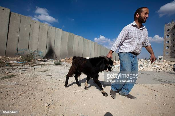 A Palestinian man lead a goat that will be scarificed for the Muslim holiday of Eid alAdha near Israels' separation barrier in the Shuafat refugee...