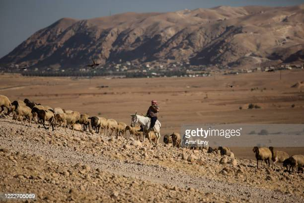 Palestinian shepard herds his sheep in a field in the Jordan Valley West Bank on June 24, 2020 in Ein Al -Auja, West Bank. Israeli Prime Minister...