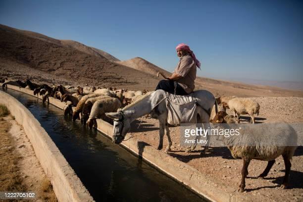 Palestinian shepard herds his sheep in Ein Al-AUJA in the Jordan Valley West Bank on June 24, 2020 in Ein Al -Auja, West Bank. Israeli Prime Minister...