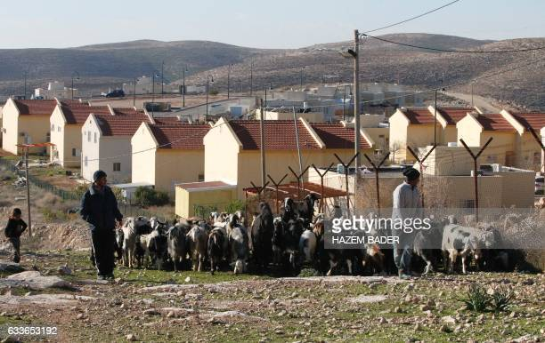 Palestinian shepherd walk their cattle past the Israeli settlement of Carmel, south of Hebron, in the village of Um al-Kheir in the occupied West...