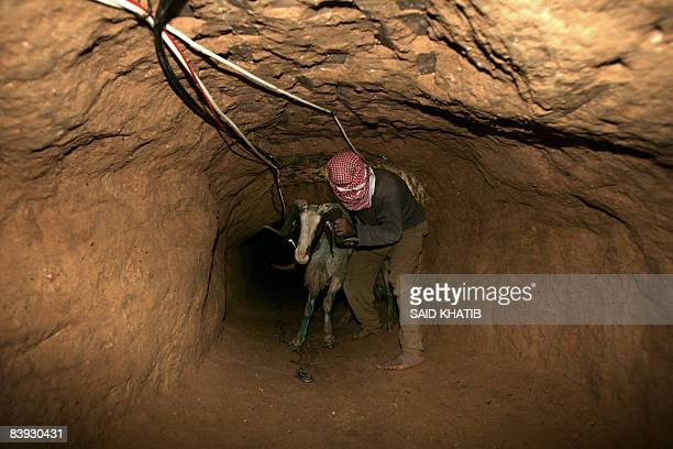 A Palestinian smuggles a sheep into the Gaza Strip through a tunnel under the EgyptGaza border at Rafah on December 5 2008 The Muslim holiday of Eid...