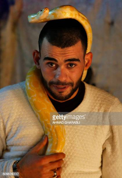 Palestinian snake enthusiast Omar Ibrahim plays with an albino Python Molurus at his home in the northern West Bank city of Nablus, on February 10,...