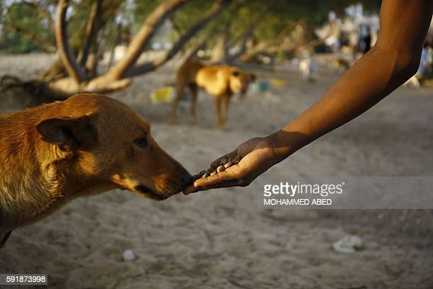 A Palestinian volunteer feeds a stray dog on August 18 2016 at the dog shelter of the AlSoulala Association for Protection Rehabilitation and...