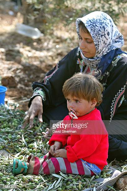 Palestinian woman Maryam Kawarik sorts olives, keeping her 18-month-old daughter Hiba close, as her family begins their annual olive harvest in their...
