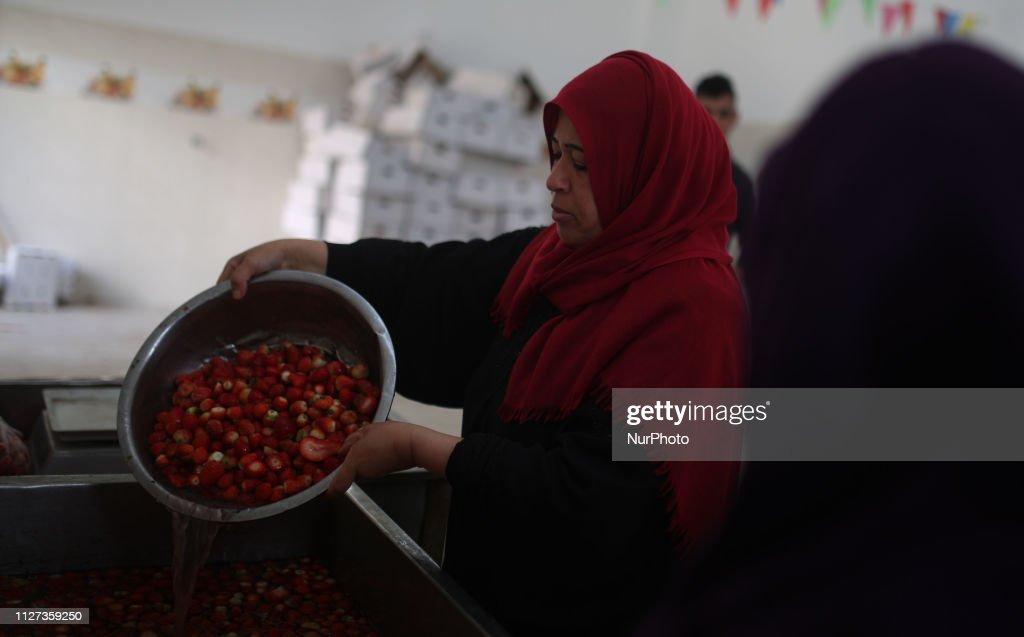 Palestinian Women Employed By UNRWA : News Photo