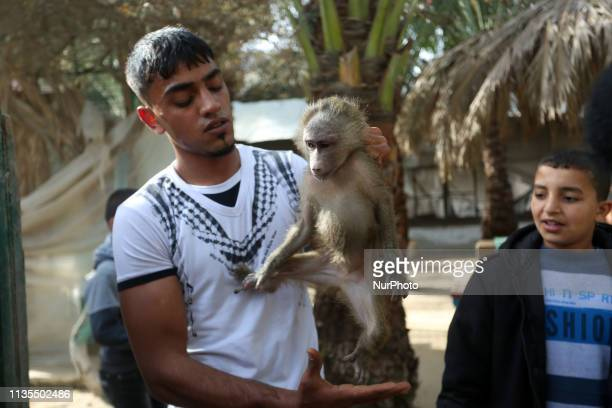 A Palestinian worker carries a monkey at a zoo in Rafah in the southern Gaza Strip during the evacuation by members of the international animal...