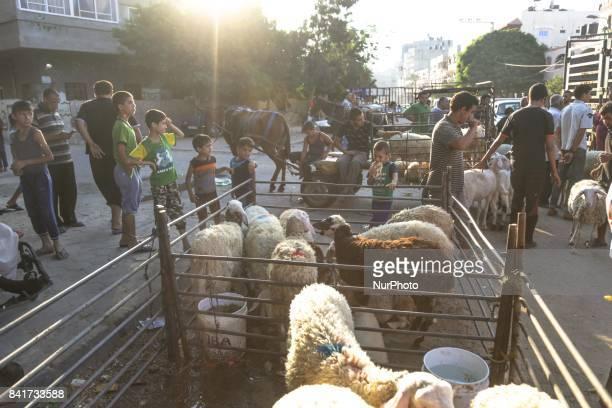 Palestinians children play near sacrificial animals in a market ahead of Eid alAdha celebrations in the northern Gaza Strip 31 August 2017 Eid alAdha...