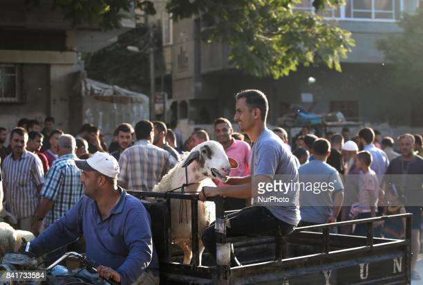 Palestinians examine a sacrificial animal in a market ahead of Eid alAdha celebrations in the northern Gaza Strip 31 August 2017 Eid alAdha is one of...