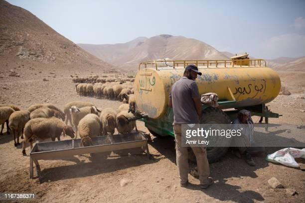 Palestinians shepherds herd their sheep in a field in the Occupied West Bank Jordan Valley on September 11, 2019 in Masu'a, West Bank. Netanyahu...