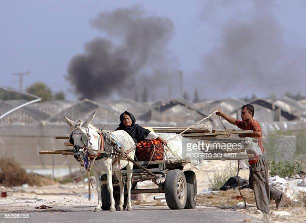 Palestinians use a horse cart to carry plastic sheeting and wooden stakes they took from a green house compound in the former Israeli settlement of...