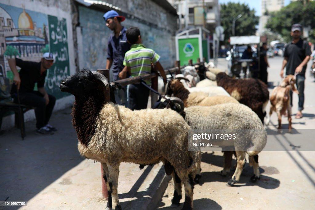 Eid al-Adha Festival In Gaza