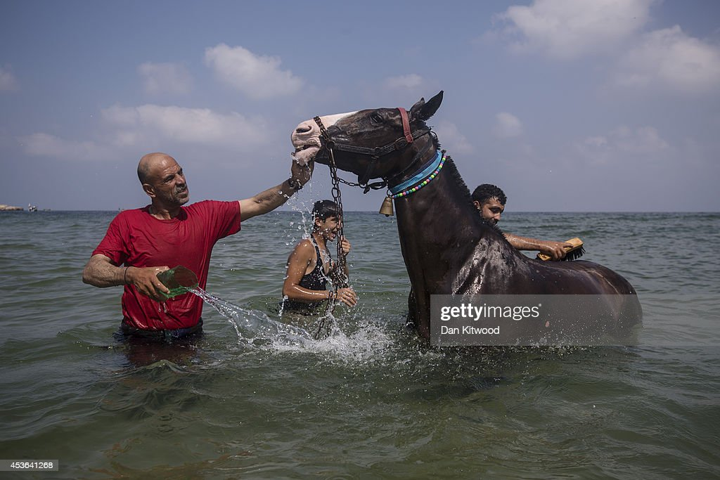 Palestinians wash a horse in the sea on August 15, 2014 in Gaza City, Gaza. A new five-day ceasefire between Palestinian factions and Israel went into effect yesterday as part of efforts aimed at reaching a permanent truce deal. The Palestinian death toll from Israel's weeks-long military onslaught on the Gaza Strip has risen to 1959, according to a Palestinian Health Ministry spokesman.