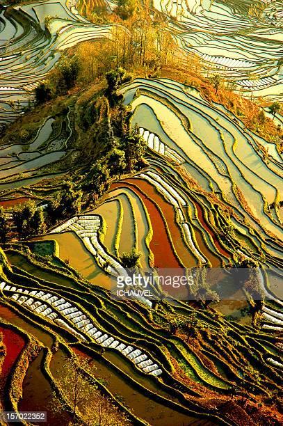 palette de couleurs riziéres yuang yuang - yunnan province stock pictures, royalty-free photos & images