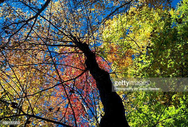 palette of fall colors and sky - ビンガムトン ストックフォトと画像