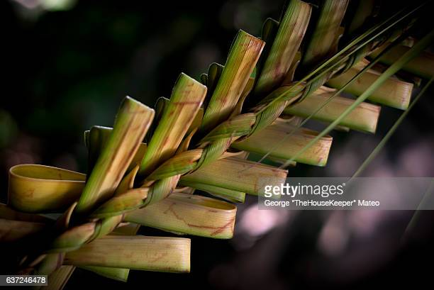 palm 2016 (3682) - palm sunday stock-fotos und bilder