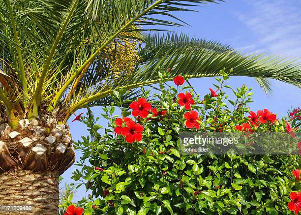 Palm and hibiscus