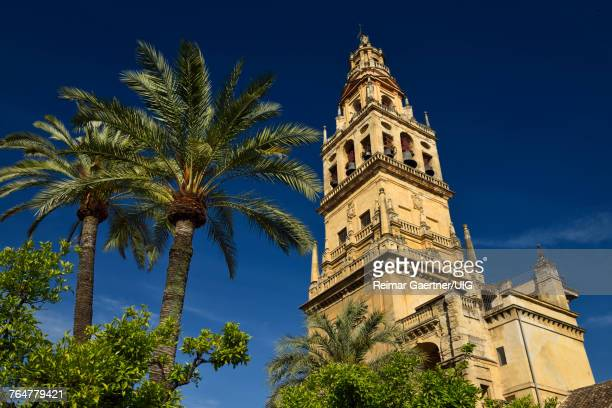 Palm and orange trees in the inner courtyard of the Cordoba Cathedral Mosque