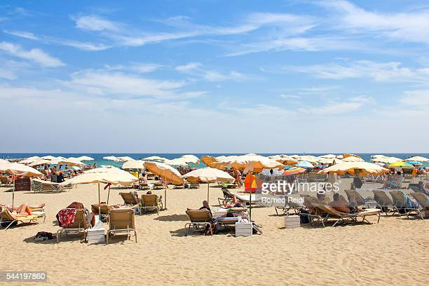 Palm and parasols on the beach of Barcelona, Spain 2