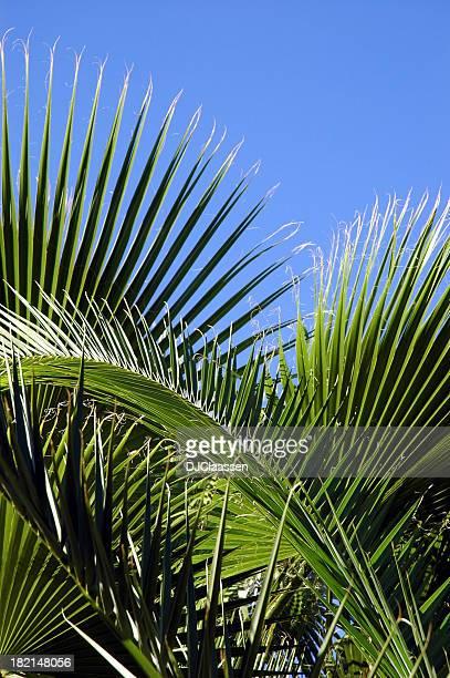 palm e sky - domingo de ramos - fotografias e filmes do acervo