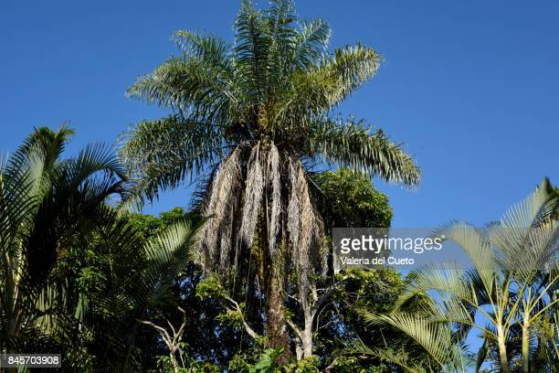 palm and sky - sem fim... valéria del cueto stock pictures, royalty-free photos & images