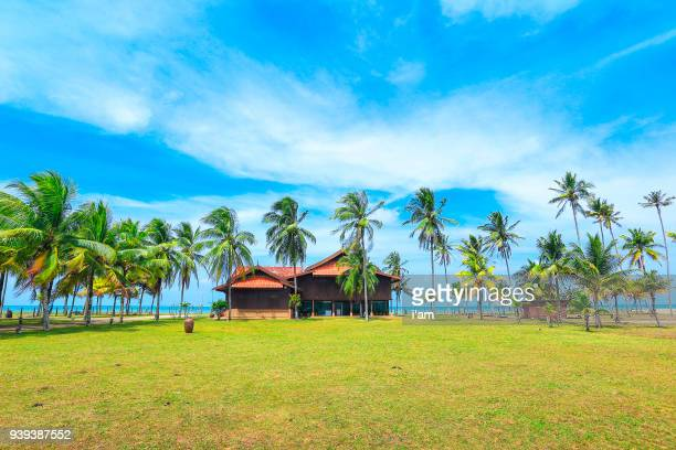 palm and tropical beach. beautiful nature, village landscape with coconut palm trees of penarik beach - terengganu stock pictures, royalty-free photos & images