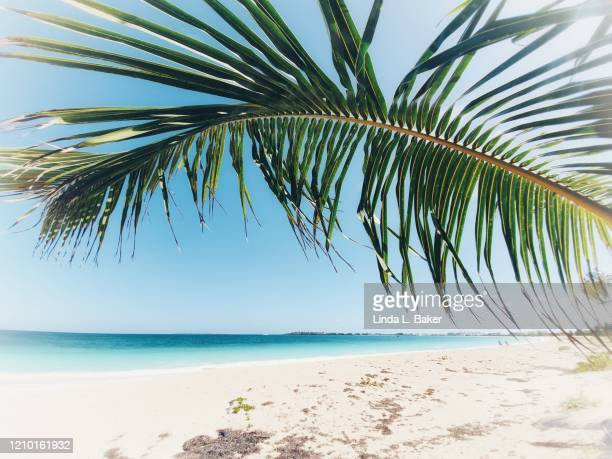 palm beach - santa clara cuba stock pictures, royalty-free photos & images