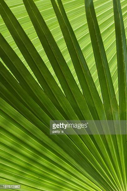 palm branches - palm sunday photos stock pictures, royalty-free photos & images