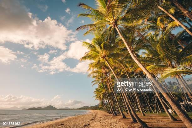 palm cove beach australia