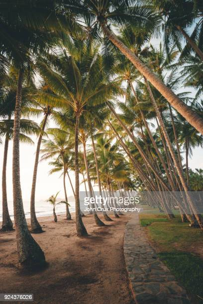 palm cove beach trees