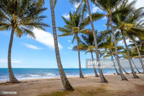 palm cove, cairns, far north queensland, australia - cairns stock pictures, royalty-free photos & images