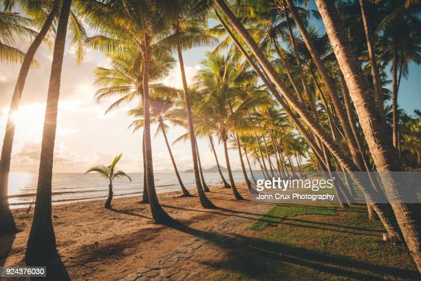 palm cove morning
