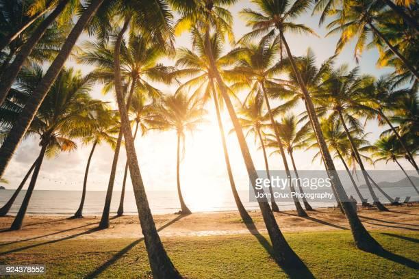 palm cove sunrise cairns