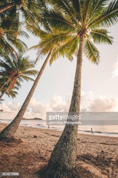 palm cove trees
