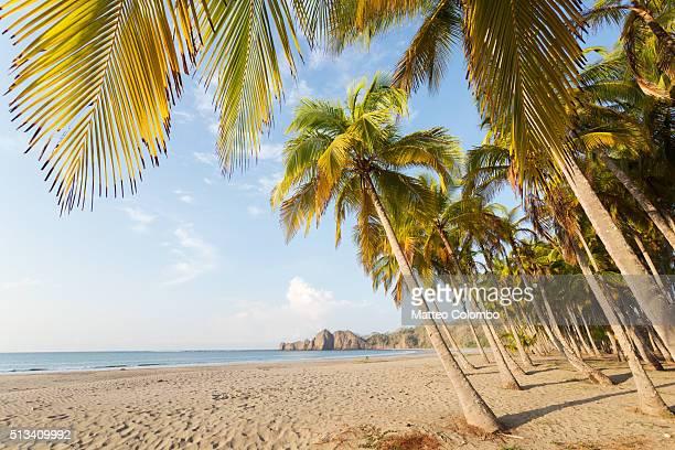 palm fringed exotic beach at sunrise, costa rica - playa carrillo fotografías e imágenes de stock