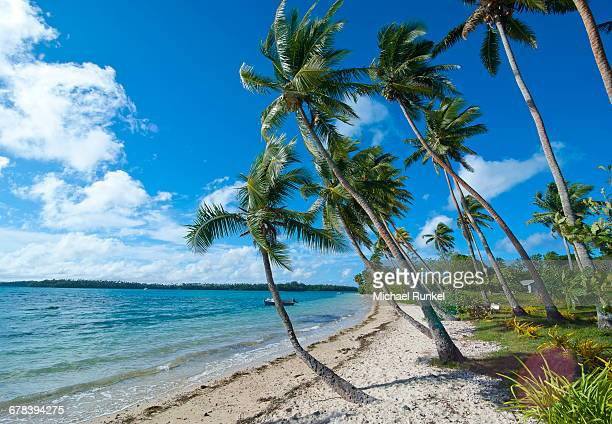 palm fringed white sand beach on an islet of vavau, vavau islands, tonga, south pacific, pacific - tonga stock pictures, royalty-free photos & images