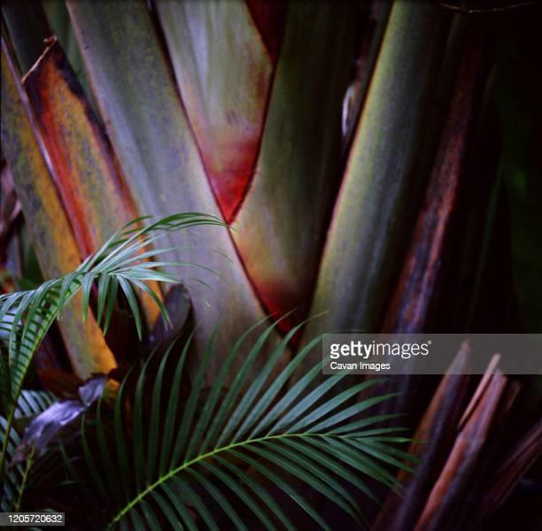 palm frond against a palm tree - pazifikinseln stock-fotos und bilder