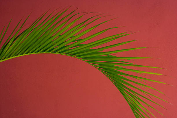 Palm frond against a red background, Puerto Rico