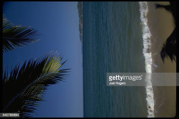 Palm fronds hang over the surf of the Pacific Ocean at Barrade Navidad west coast of Mexico