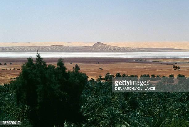 Palm grove and a sebkha near Timimoun Sahara Desert Algeria